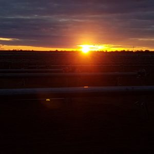 Sunrise over solar farm